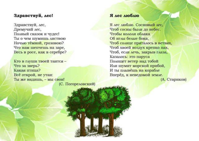 Экологическое воспитание в стихах 8