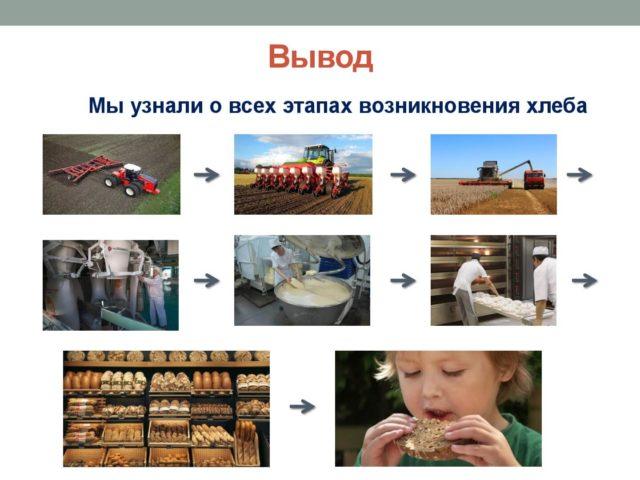 Хлеб 15